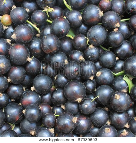 Berry of blackcurrant background. Closeup