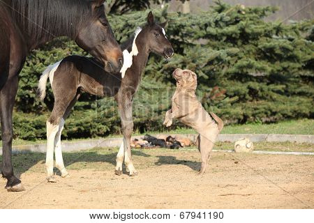 Nice Young Dog Playing With Foal