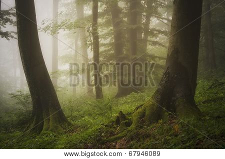 Green forest with mist