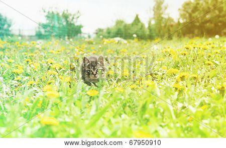 Curiosity Kitten