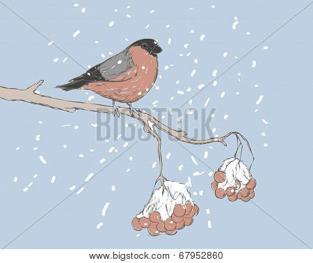 bullfinch bird on branch of rowan vector
