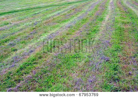 Abstract Background. Cut Grass.