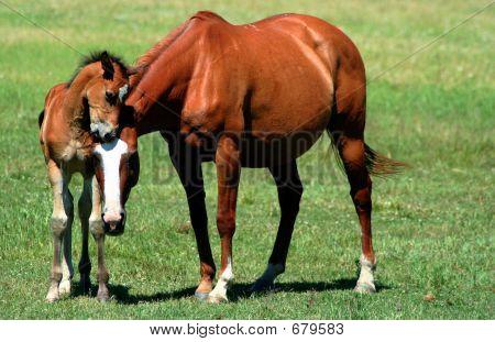 Equine Affection