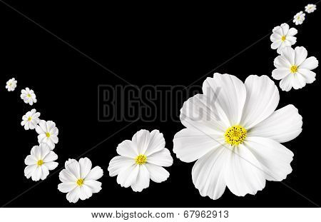 Flowers Floating On Background