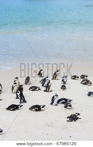 Boulders Beach, Penguin Colonies, Cape Town,south Africa.