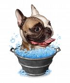 picture of tub  - Dog bath funny concept as a happy bulldog in a metal bucket tub with soap bubbles on a white background as a pet grooming symbol and animal cleaning icon - JPG