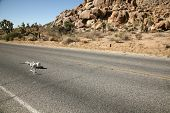 pic of sternum  - A lost hiker dies of thirst on a deserted desert road inches away from a bottle of water - JPG