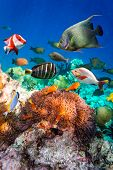 picture of saltwater fish  - Topical saltwater fish  - JPG