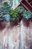 picture of house plants  - House plants green succulents old wooden box and blue vintage glass bottles on a wooden board home gardening and decorating rustic style.