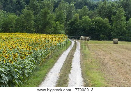 Marches: Country Landscape