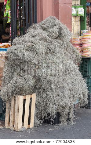 Spanish Moss For Sale