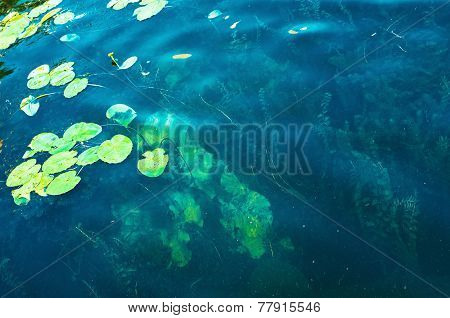 Aquatic Vegetations