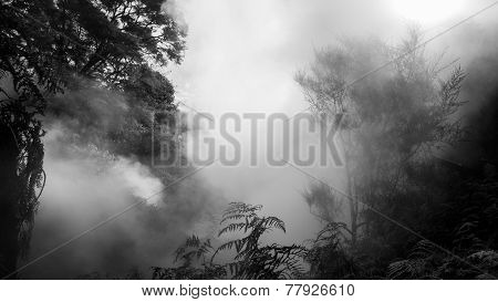 Foggy trees due to a boiling river (volcanic activity) in New Zealand