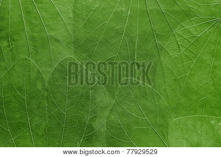 Background From Leaves Of Bright Green Color