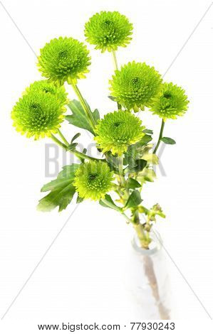 Green Button Mums In A Bottle