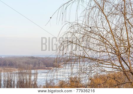 Weeping Willow On A Background Of A Winter Landscape