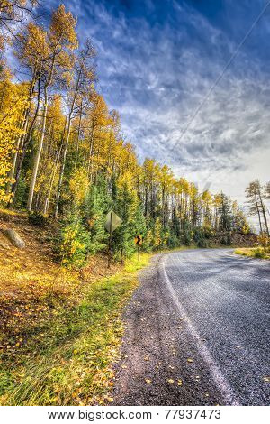 Aspens On A Country Road