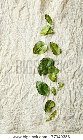 Kaffir lime leaves on a natural cotton cloth