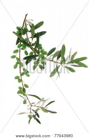 green raw olives on branch over white