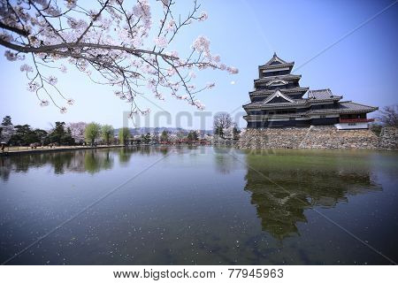 Sakura And The Castle, Matsumoto, Japan