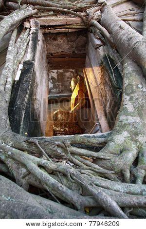 Buddha In Tree Frame, Samut Songkhram, Thailand