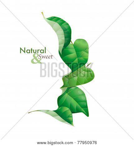 Vector foglie