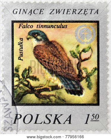 POLSKA - CIRCA 1975 : A Stamp printed in Poland shows image of bird Kestrel -