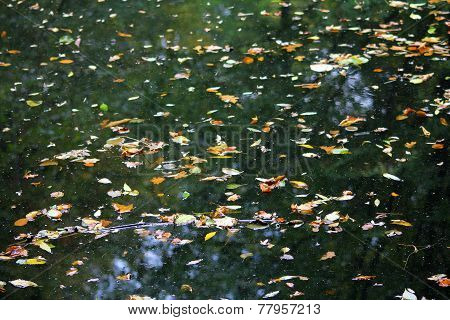 The Fallen Autumn Leaves On The Water