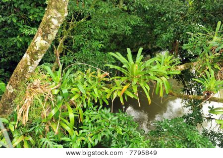 Bromeliads On Tree