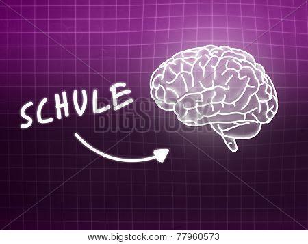 Schule Brain Background Knowledge Science Blackboard Pink