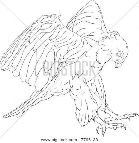 attacking hawk