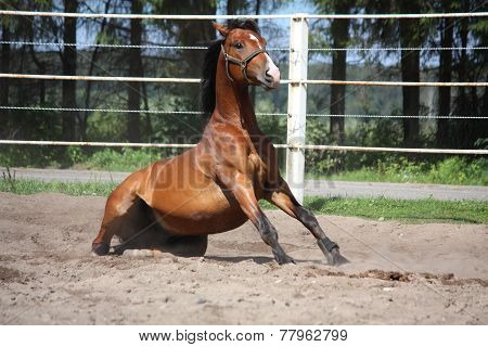 Brown Horse Sitting On The Ground
