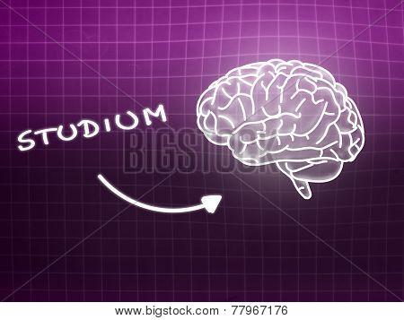 Studium Brain Background Knowledge Science Blackboard Pink