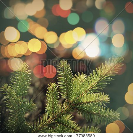 Spruce Tree Branch Closeup Photo With Colorful Lights Bokeh