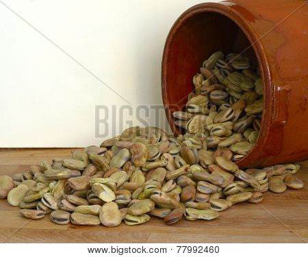 dried fava beans poured from a container i
