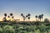 image of mesopotamia  - Sunrise on El Palmar National Park  - JPG