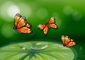picture of water bug  - Illustration of butterflies flying over a water lily - JPG