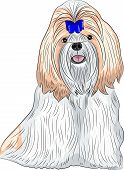 picture of dog breed shih-tzu  - color drawing of the dog breed Shih Tzu isolated on a white background - JPG