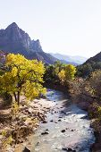 Постер, плакат: Autumn In Zion National Park