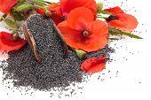 foto of poppy flower  - Poppy flowers and poppy seeds in wooden scoop - JPG