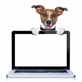 picture of working-dogs  - jack russell terrier dog behind a pc computer screen isolated on white background - JPG