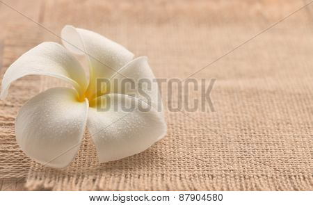 White plumeria flower soft focus on burlap vintage color style