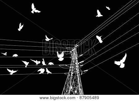 illustration with electrical pylon and birds isolated on black background