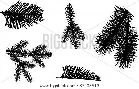 illustration with black pine branches isolated on white background