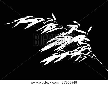 illustration with white bamboo branch isolated on black background