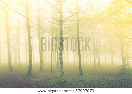 Forest tree during a foggy day ( Filtered image processed vintage effect. )