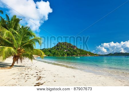 Beautiful beach with palm tree at Seychelles, Praslin, Cote d'Or