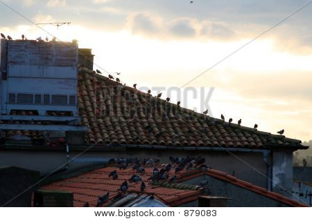 Sunset On Rooftops