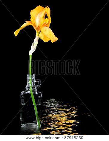 gold iris in antique bottle