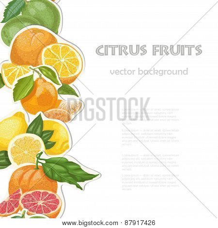 Vector Background With Citrus Fruits On White Background. Seamless Vertical Citrus Element